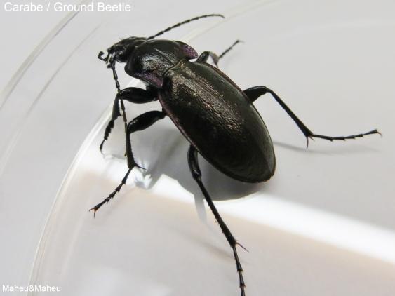 insecte nuisible maison avie home. Black Bedroom Furniture Sets. Home Design Ideas